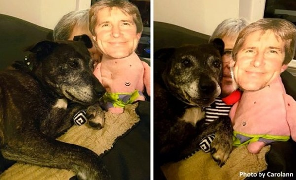 Когда её хозяин уехал, она отказалась от еды и легла умирать… Спасла собаку только одна странная идея!