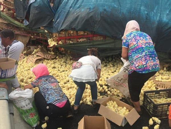 На трассе перевернулся грузовик с тысячами цыплят…
