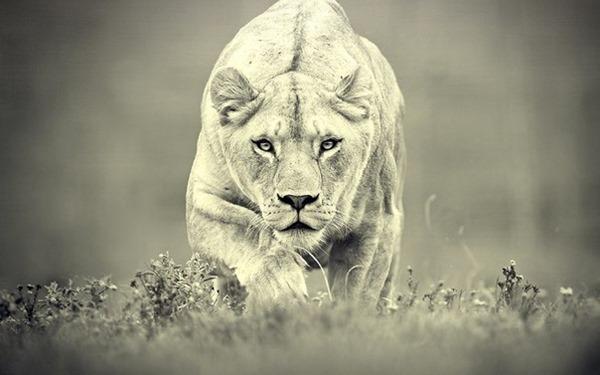 На каких животных похожи женщины разный знаков зодиака!