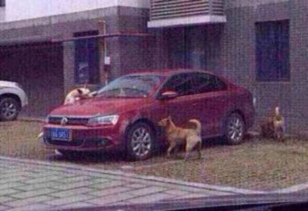 Собака сбитая водителем отомстила ему! Посмотрите, как она поступила!