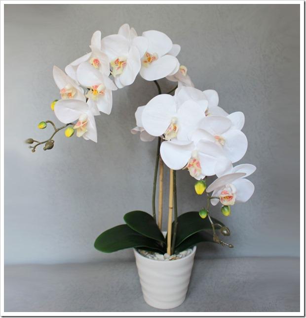 9 правил, благодаря которым орхидея будет буйно цвести круглый год. И всё исключительно своими руками!