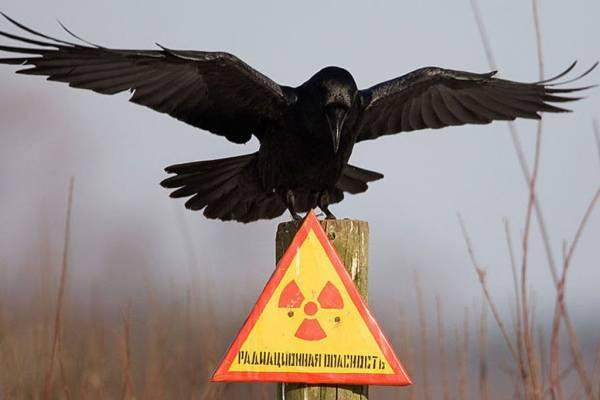 Чернобыль спустя 30 лет после катастрофы: исследователи поражены происходящим здесь
