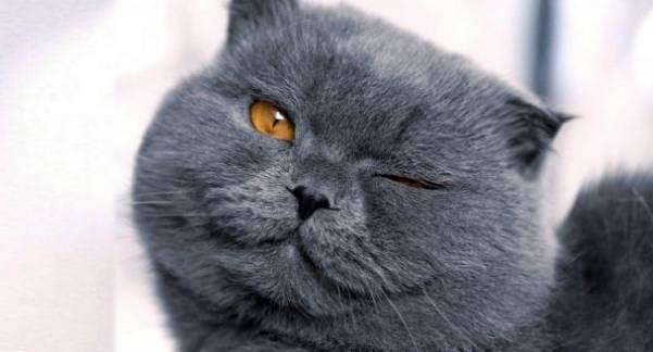 Этот кот явно чем-то не доволен. Послушайте какими СЛОВАМИ он высказывает свои претензии!