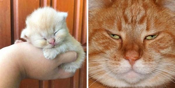 Котики растут невероятно быстро: 11 фотодоказательств