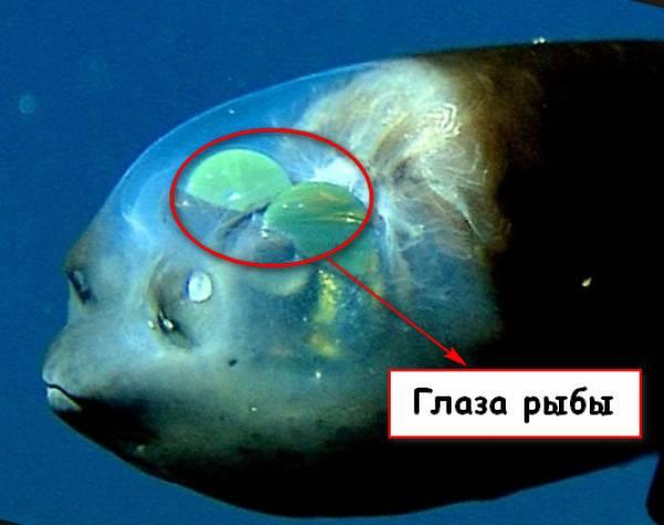 Рыба как рыба, но когда люди увидели ее голову, они остолбенели