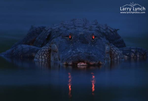 Парень просто фотографирует ночное болото, а когда проявляет снимки - это магия
