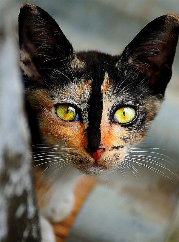 ТОП 20 самых очаровательных кошечек на планете