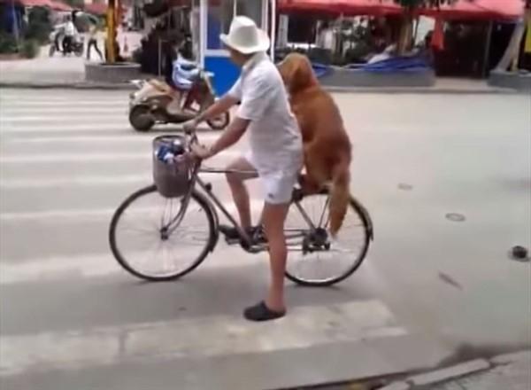 Собака охраняет велосипед. Но только посмотрите, что случилось, когда вернулся хозяин!