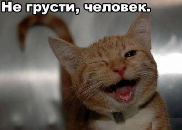 Приколы с котами. ТОПовая подборка смешных котэ под музыку!