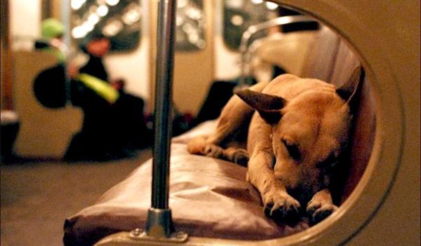 В вагон метро заходит собака породы двор-терьер, средних размеров, и садится посреди вагона… А дальше я обалдел!