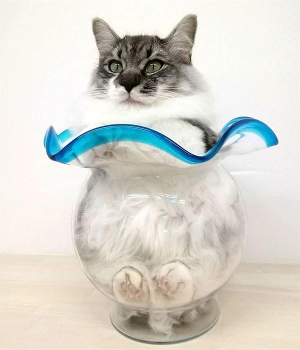 15 доказательств того, что все коты — немножечко жидкость и способны затечь куда угодно