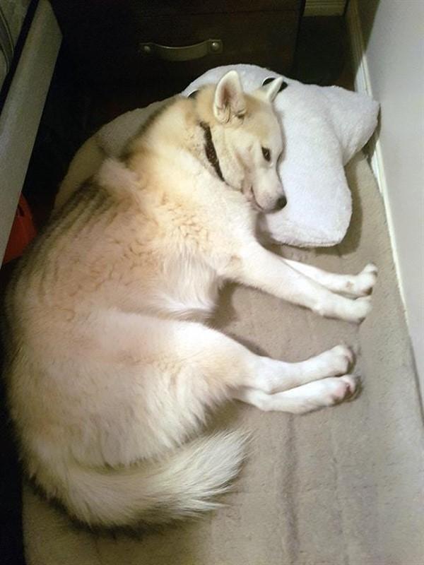 18 крутых фотографий собак, которые вкупе с комментариями их владельцев делают интернет ещё прекраснее