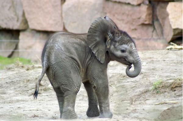 22 неожиданных факта о животных, в которые сложно поверить (но вы постарайтесь)