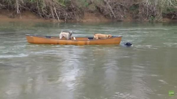 Каноэ с перепуганными собаками относило все дальше от берега. Казалось бы, помощи ждать неоткуда…