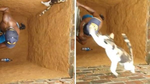 Парни решили спасти кота из колодца. То, как отреагировал на их поступок кот — просто нечто!