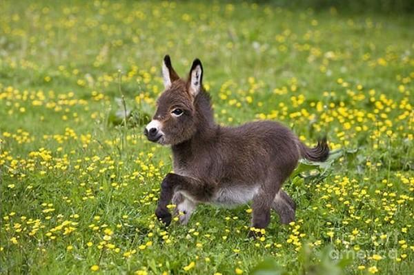 25 маленьких миленьких осликов, которые сделают ваш день чуточку лучше!