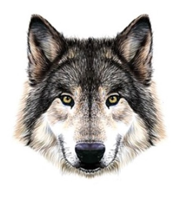 Животное, которое вы увидели первым, расскажет об особенностях вашего характера