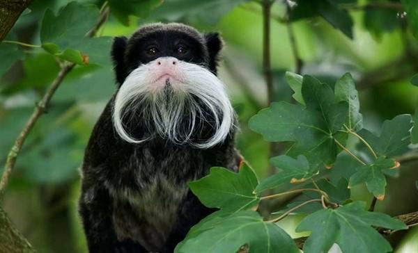 30 странных животных, которых как будто нарисовали в фотошопе. Но они реально существуют