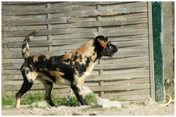 Самые невероятные окрасы собак — это удивительно