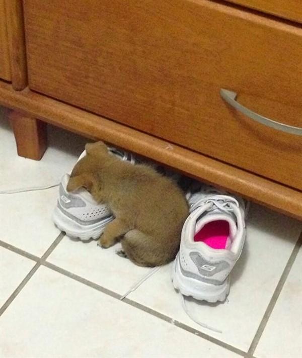 20 уморительных щенков, которые спят как, когда и где угодно