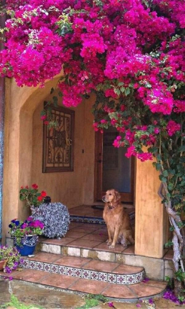 Очень красивые дома, которые будто выросли из цветочного куста