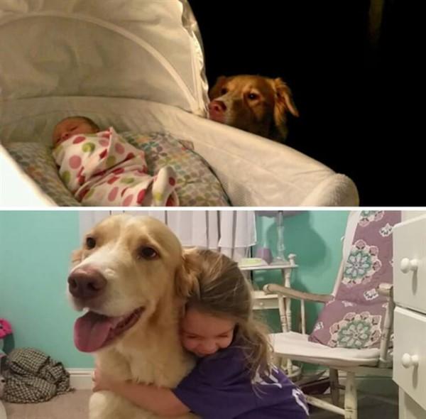 20 собак, выросших вместе со своими владельцами