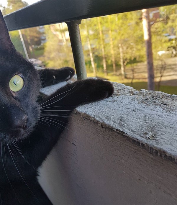 Он наконец увидел мир! Неподдельные эмоции кота, впервые попавшего на балкон