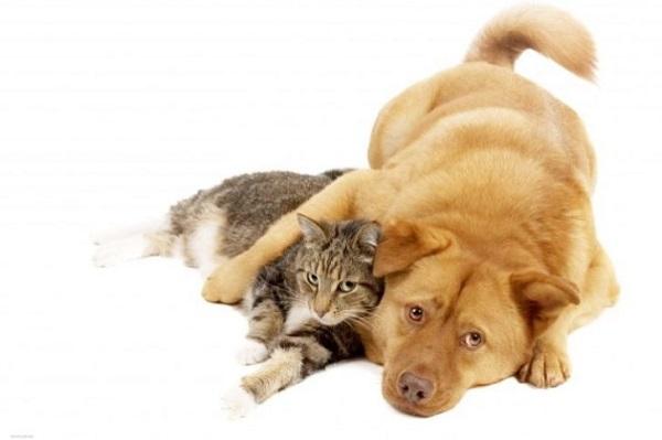 Когда кот решил прокормить всю нашу семью: меня, себя и пса Бакса. Спасибо. От души насмеялась! Меня, себя и пса Бакса. Спасибо. От души насмеялась!
