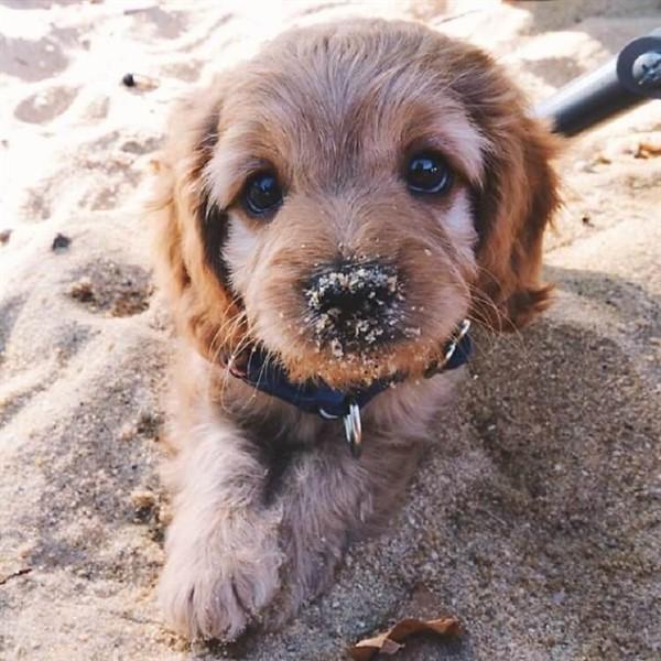 15 щенков, глядя на которых вы обязательно захотите завести собаку