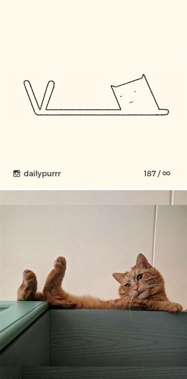 25 доказательств того, что коты могут принять любую дурацкую позу
