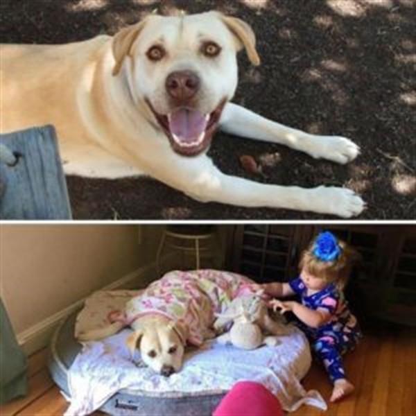 Родители делятся своими фото до и после появления детей