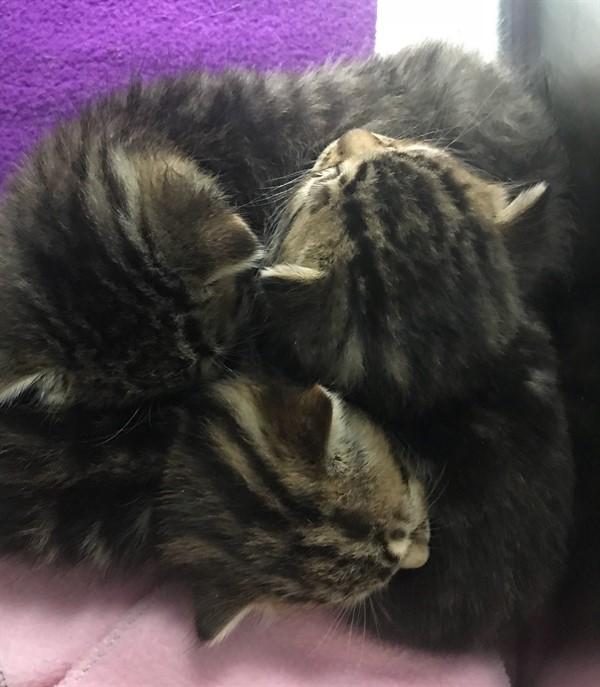 Бородатый ветеринар был добр к осиротевшим котятам, и они решили, что он – их мамочка