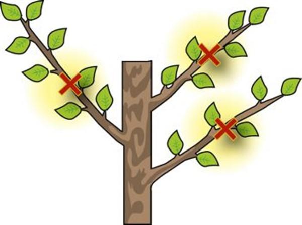 Несколько рабочих методов, как обхитрить яблоню и заставить ее плодоносить