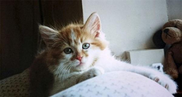 Самый старый кот в Мире отметил свое 30-летие