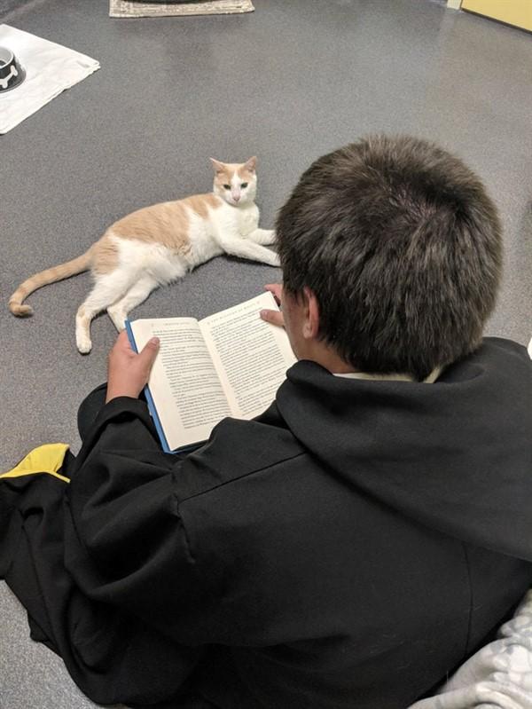 Парень решил подружиться со слепым котом, который всех боялся. И выбрал для этого оригинальный способ