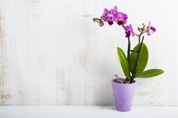 Они даже ночью выделяют кислород! 9 растений, которые хорошо иметь в спальне