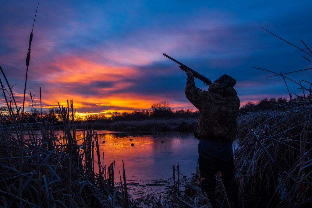 Факты об охоте